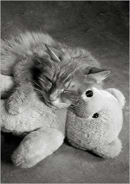 A nap with Teddy, Vykort