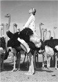 Wenda&Ostriches Vogue, Postcard