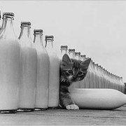 ANONYME Le paradis des chat, Postcard