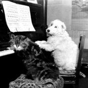 Dog and cat by the piano, Greeting Card