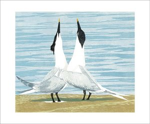 Sandwich Terns, Greeting Card