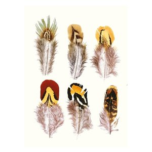 Feathers, Curiosities, Greeting Card
