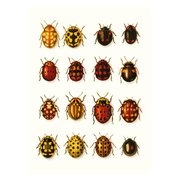 Beetles, Curiosities, Greeting Card