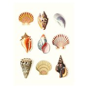 Seashells, Curiosities, Greeting Card