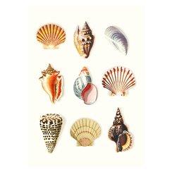 Seashells, Curiosities, Greeting Card