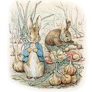 Rabbit, Greeting Card