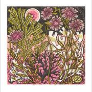 NC A.Lewin/Sea Pinks