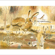 NC A.Waddington/Resting Hare