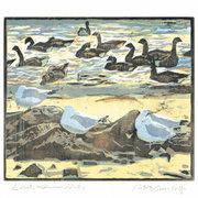 NC R.Greenhalf/Seagulls&Common