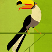 Toucan, Greeting Card