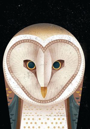 Barn Owl, Greeting Card