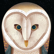 Barn Owl, Greeting Card