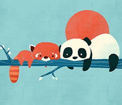 Panda and Raccoon, Greeting Card