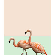 Flamingo, Greeting Card