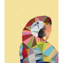 Macaw, Greeting Card