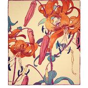 NC M.Royds/Tiger Lilies