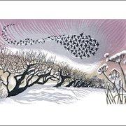 NC N.Bowers/Winter Starlings