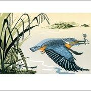 NC P.Grimmon/Kingfisher