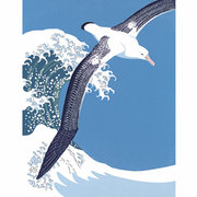 NC R.Gillmor/Wander.Albatross