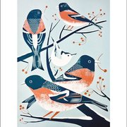 Bramblings & a Nuthatch, Winter Cards