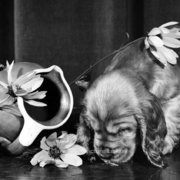 Puppy with broken vase, Greeting card
