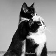 Two kittens, Greeting card