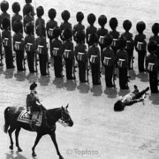 Queen and fainting guard, Greeting card