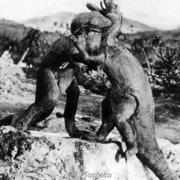 Dinosaurs fighting, Greeting card