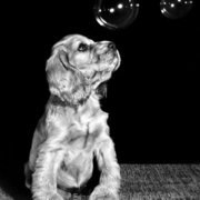 Puppy with bubbles, Greeting card