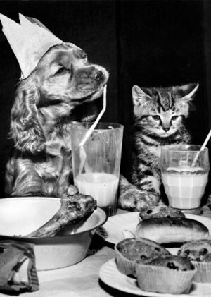 Dog and cat having a party, Greeting card