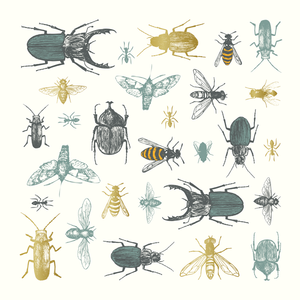 Insects, Eden Project, Greeting Card