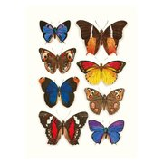 Butterflies, Curiosities, Greeting Card
